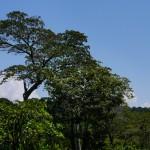 Canopée, Parc Manuel Antonio