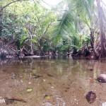 Source d'eau douce sur l'île